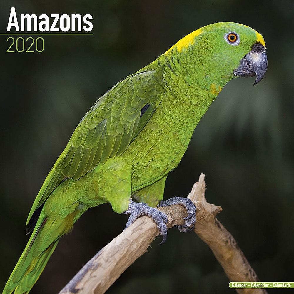 2020 Calendar Amazon