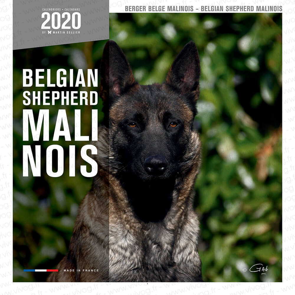 Berger Malinois - 2019 Calendar - Martin Sellier - Martin Sellier