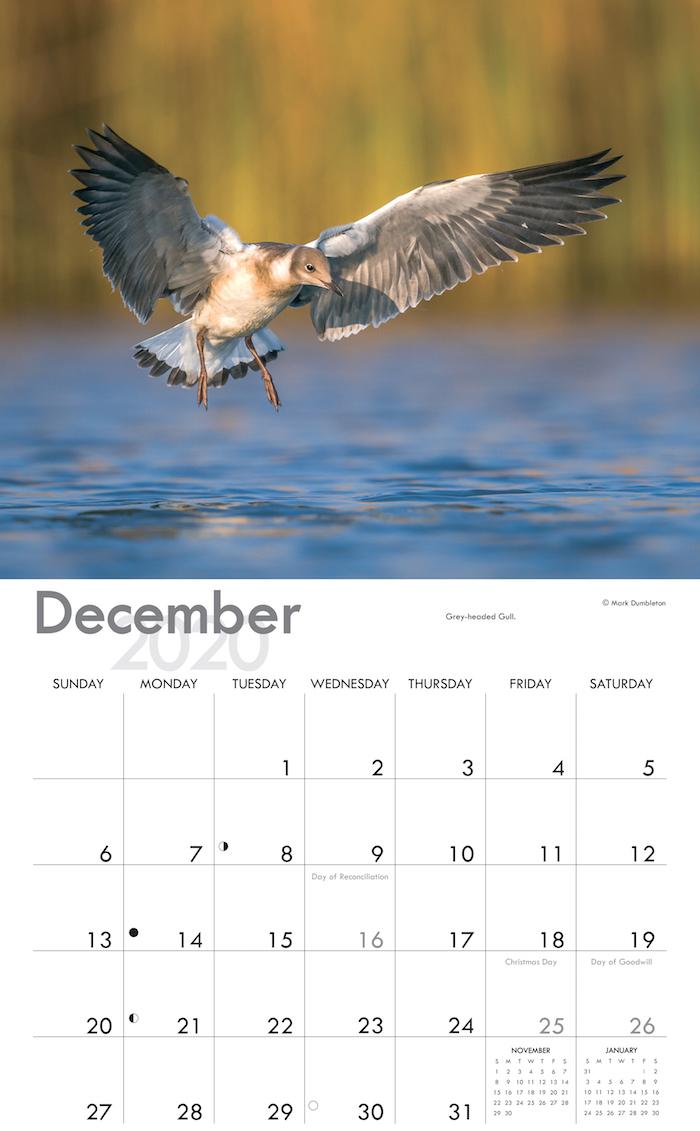 Calendar Shop
