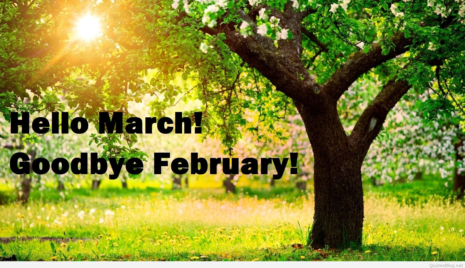 Hello March, Goodbye February