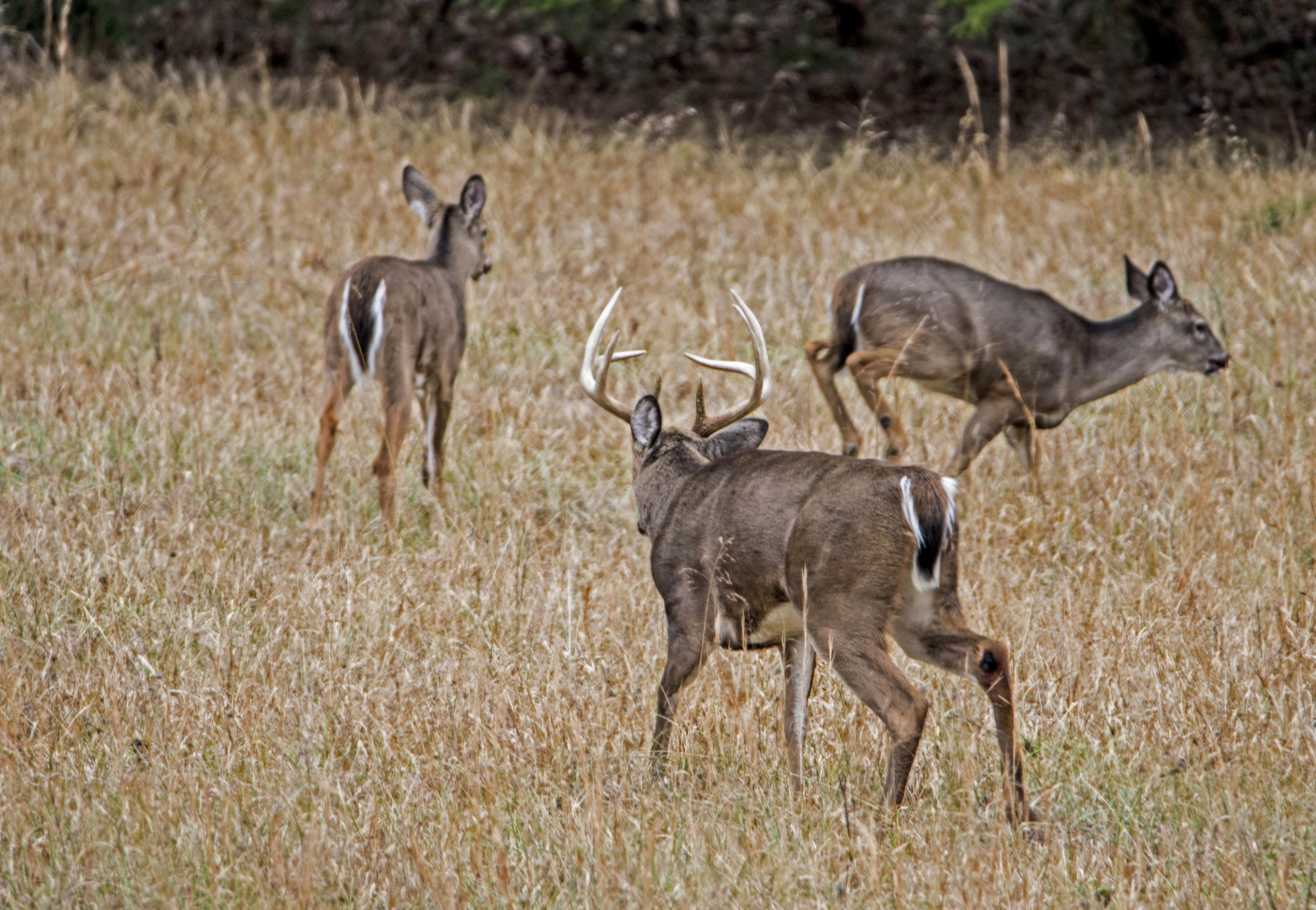 2020 Il Deer Rut Season
