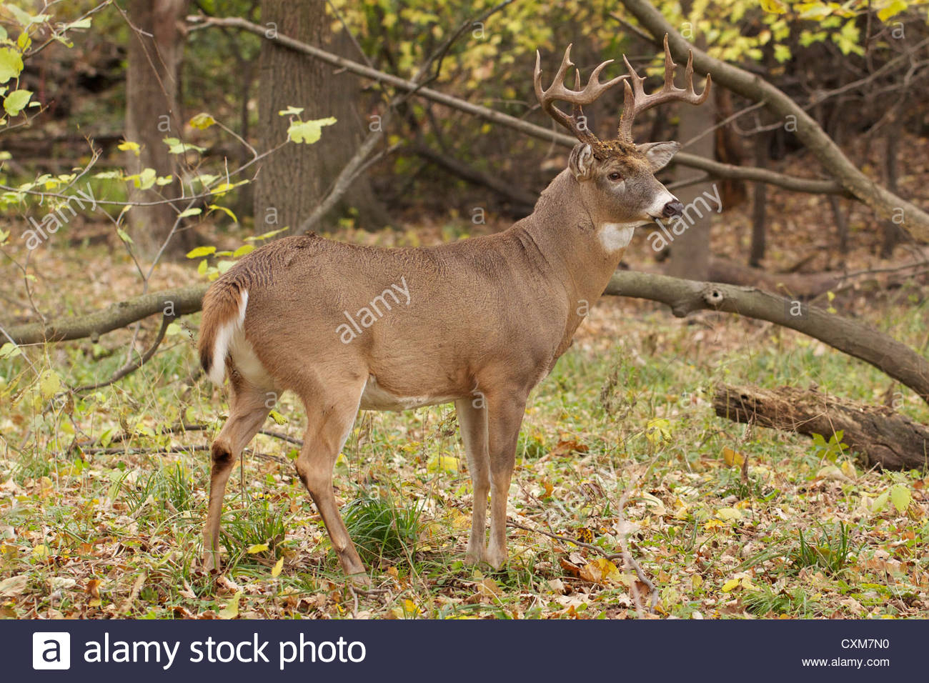 Deer Rut In Illinois 2020
