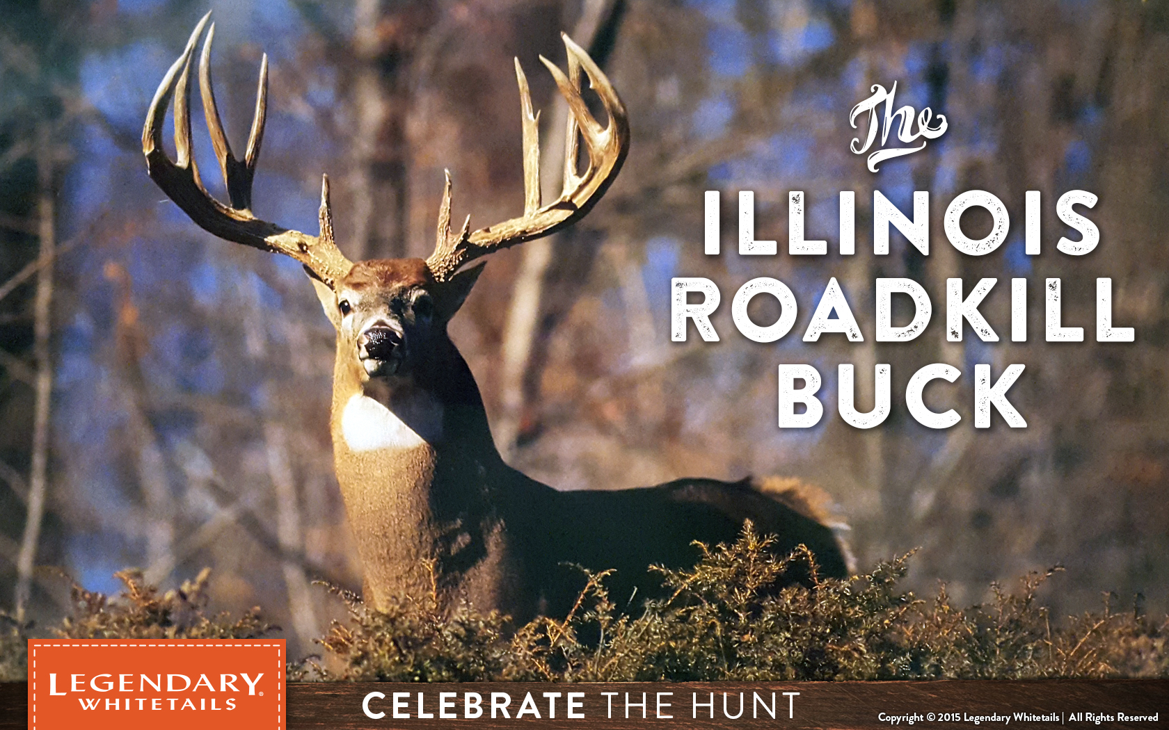 Illinois Deer Rut