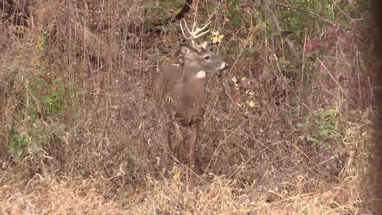 Pre-Rut Illinois Whitetail Muzzleoader Hunt
