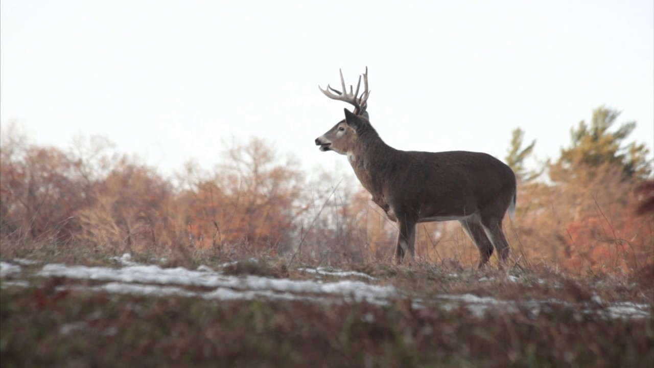 When Is The Rut In Illinois 2020