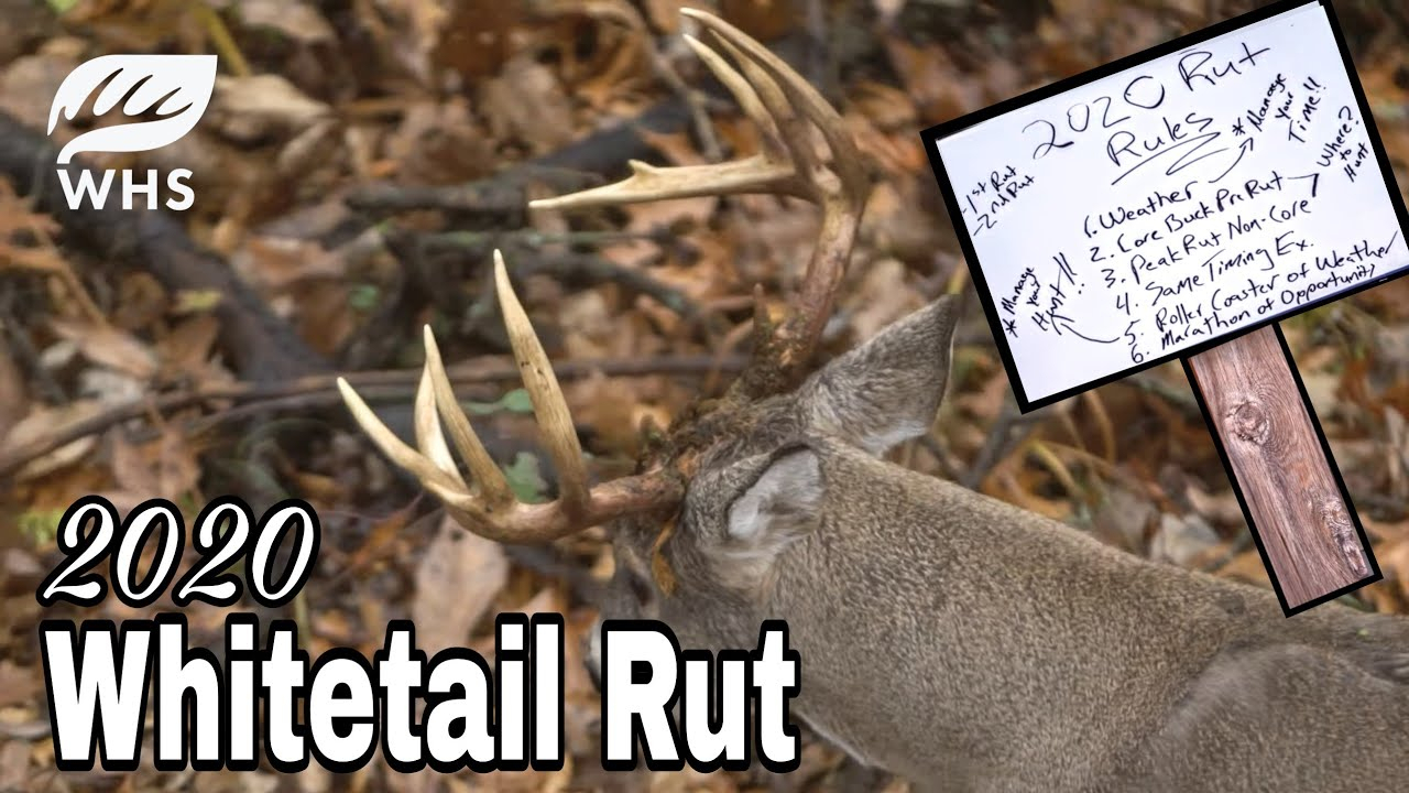 2020 Whitetail Rut Forecast