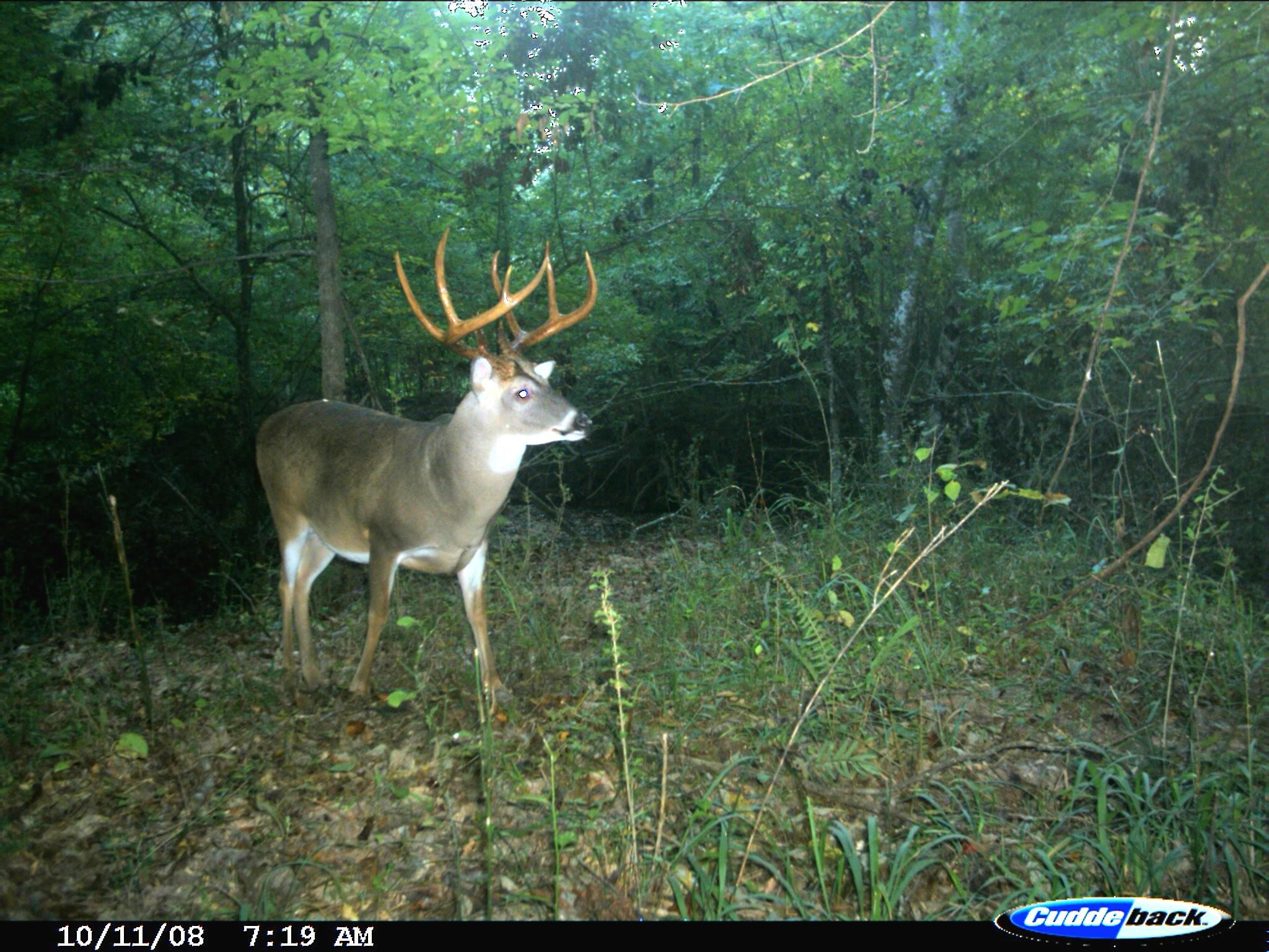 Exclusive: Peak 2016 Rut Forecast For Southern Deer Hunters
