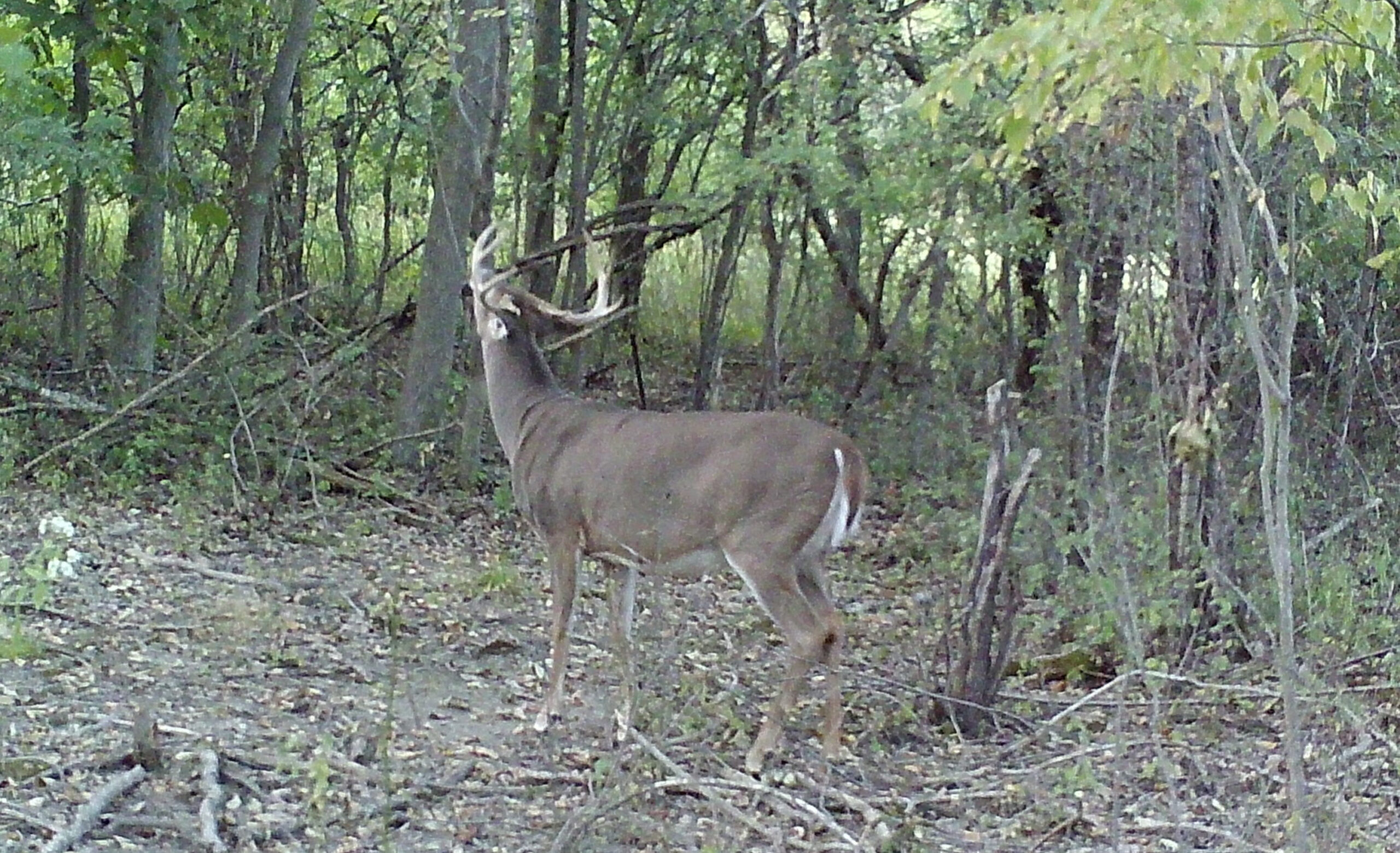 The Lull: Quiet Prelude To The Rut