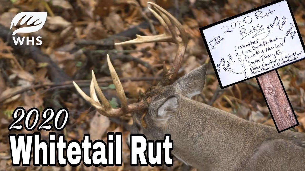 2021 Whitetail Rut Calendar For Wisconsin